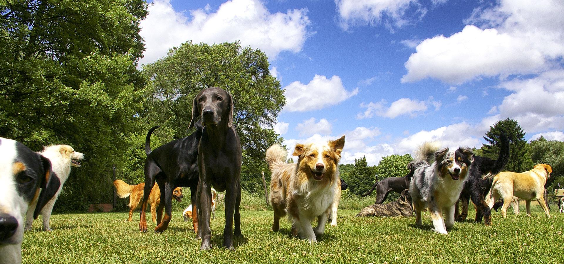 Revier Für Hunde